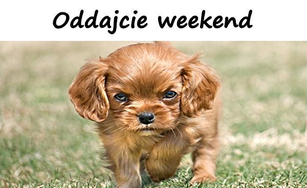 Oddajcie weekend