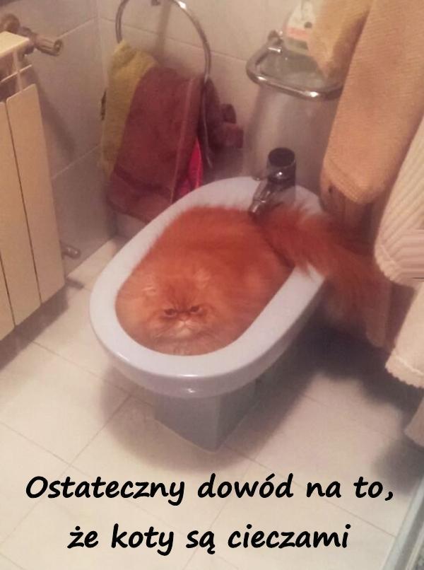 Ostateczny dowód na to, że koty są cieczami