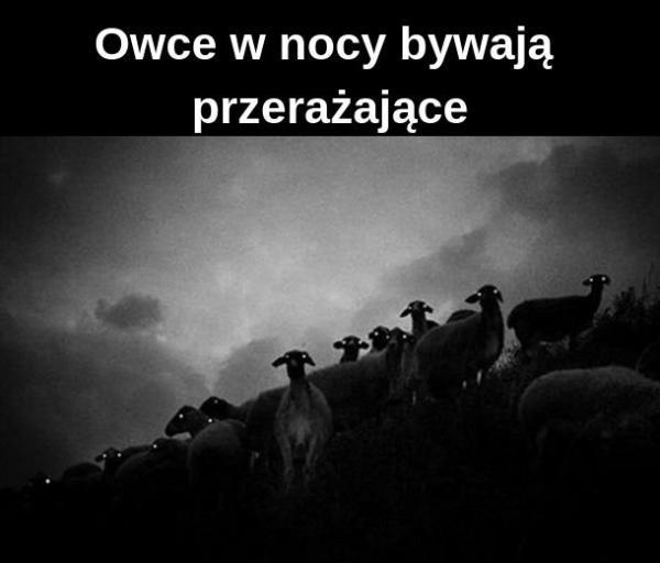 Owce w nocy bywają przerażające