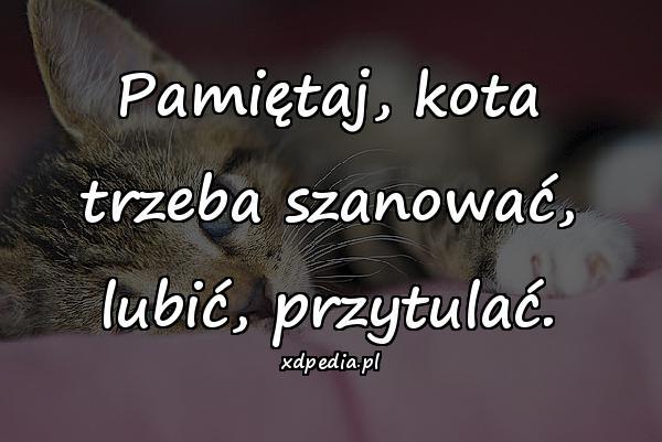 Pamiętaj, kota trzeba szanować, lubić, przytulać.