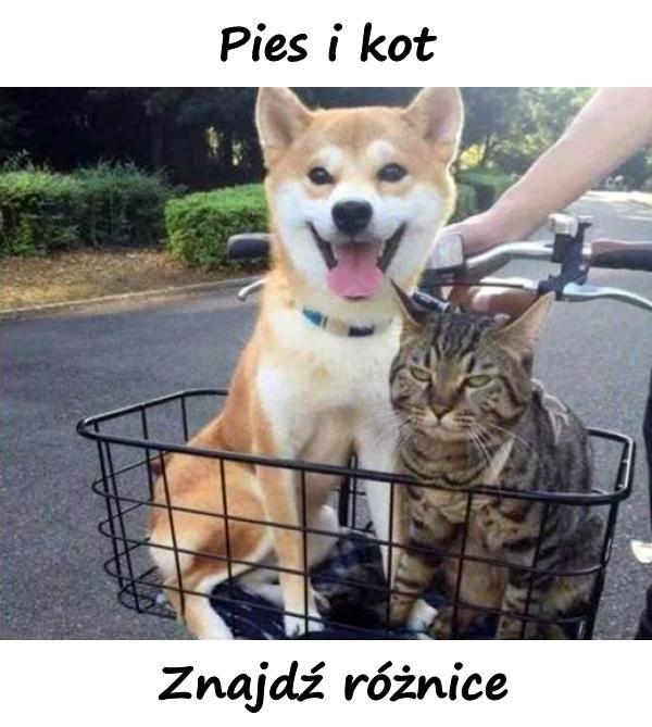 Pies i kot. Znajdź różnice.