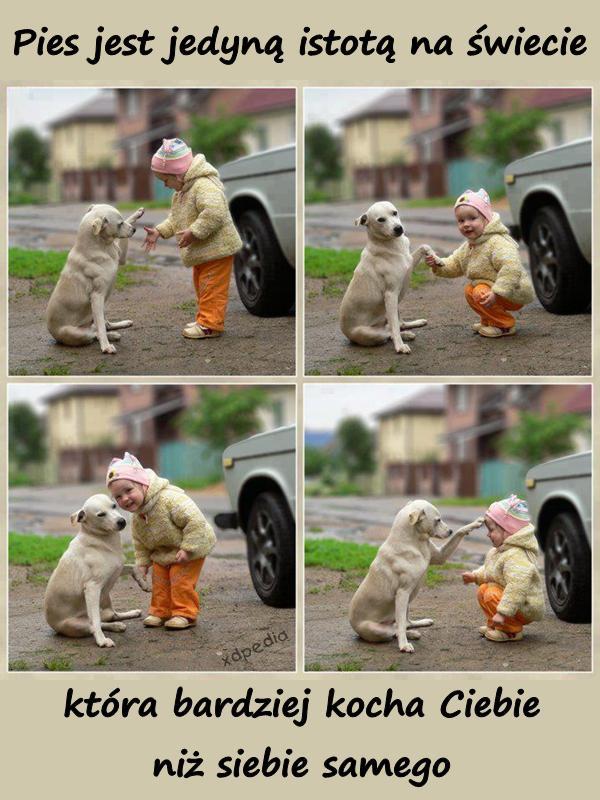 Pies jest jedyną istotą na świecie, która bardziej kocha Ciebie niż siebie samego