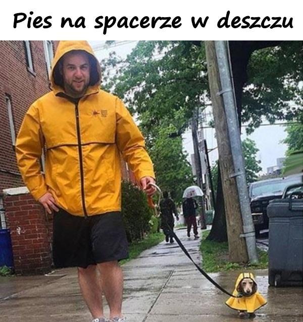 Pies na spacerze w deszczu