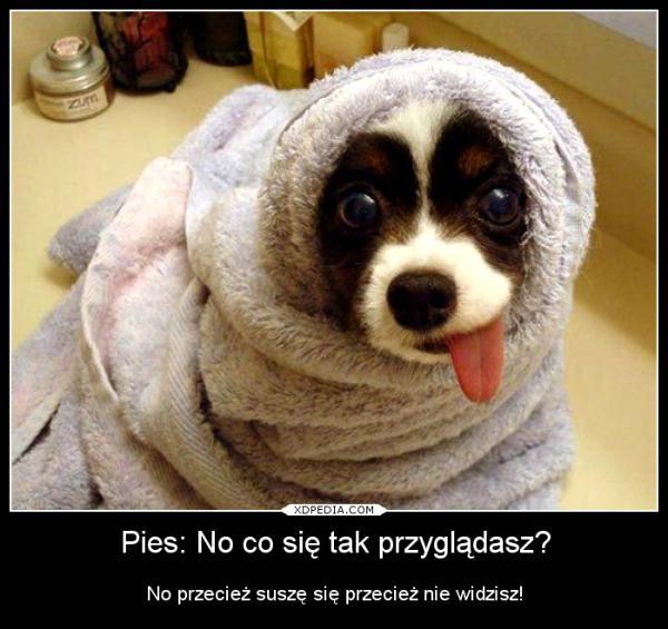 Pies: No co się tak przyglądasz? No przecież suszę się przecież nie widzisz!