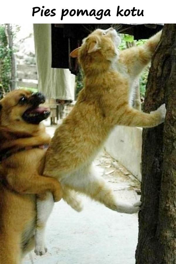 Pies pomaga kotu