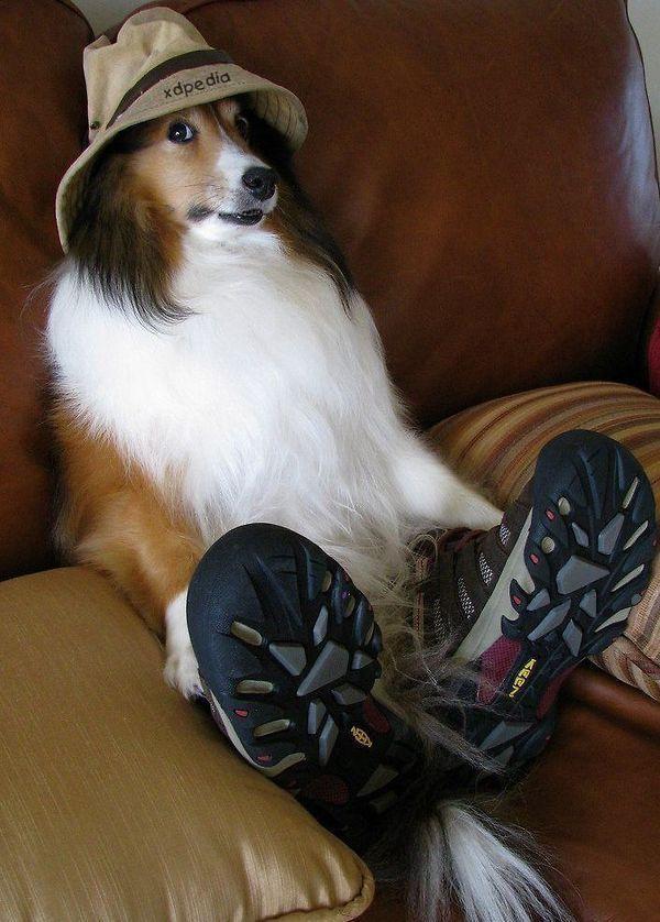 Pies - przebieranka