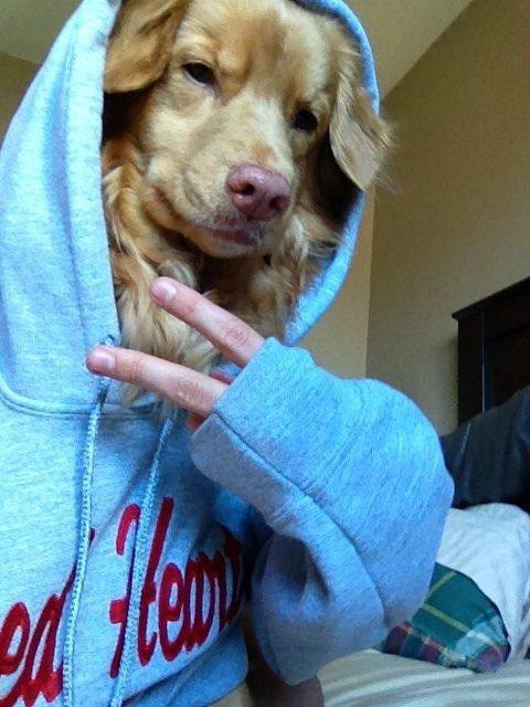 Pies, który został raperem.