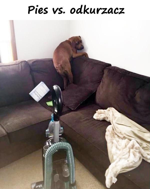 Pies vs. odkurzacz