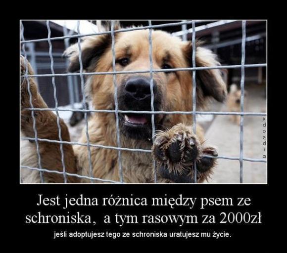 Jest jedna różnica między psem ze schroniska, a tym rasowym za 2 000 zł, jeśli adoptujesz tego ze schroniska uratujesz mu życie.