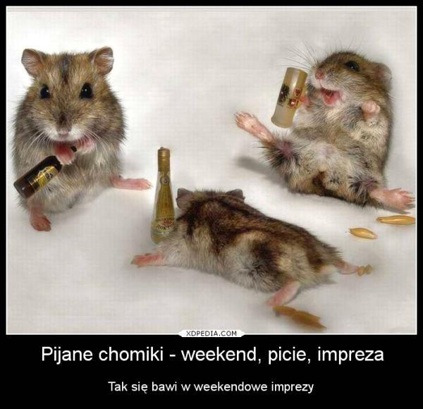 Pijane chomiki Tak się bawi w weekendowe imprezy