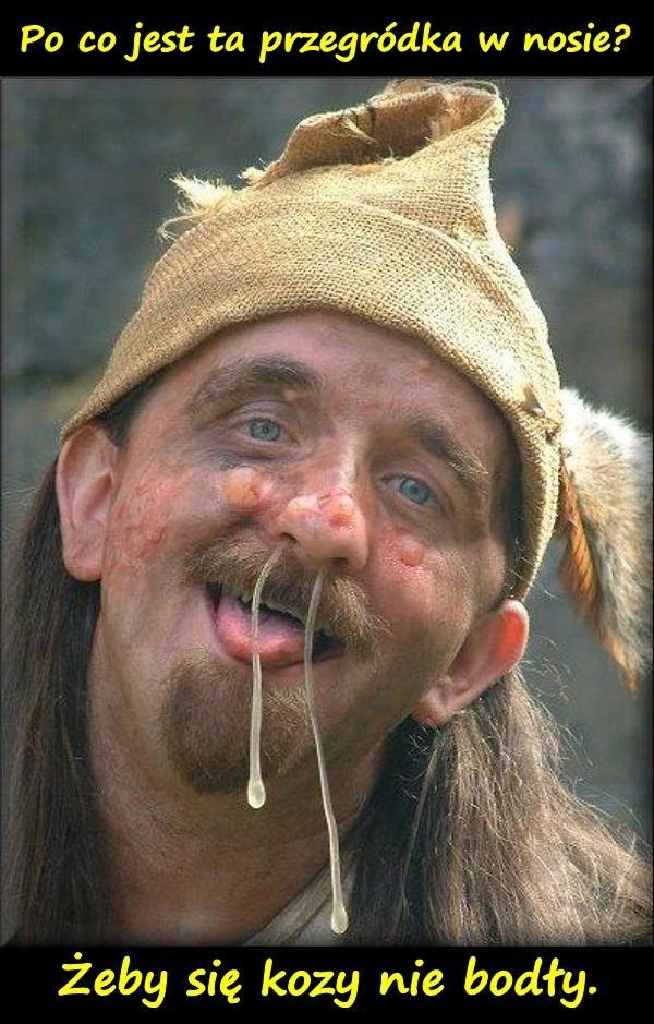 Po co jest ta przegródka w nosie??? Żeby się kozy nie bodły.