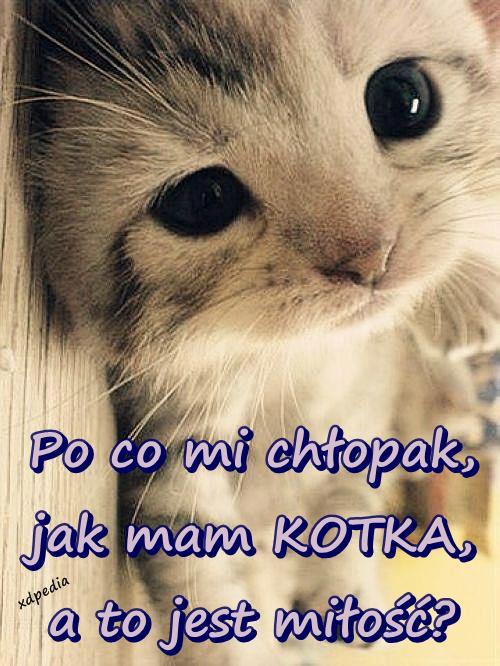 Po co mi chłopak, jak mam KOTKA, a to jest miłość? Tagi: miłość, demotywator, kot, kociak, kotek, chłopak, demotywatory, demot, słodziak.