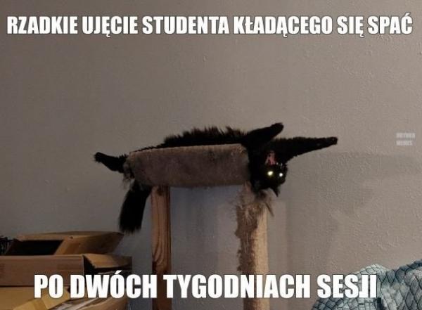 Rzadkie ujęcie studenta kładącego się spać po dwóch tygodniach sesji