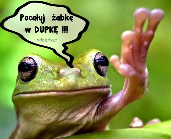 Pocałuj  żabkę w DUPKĘ !!!