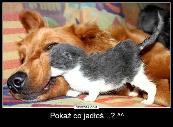 Humor śmieszne Obrazki Memy Pies śmieszne Besty Mem śmieszne
