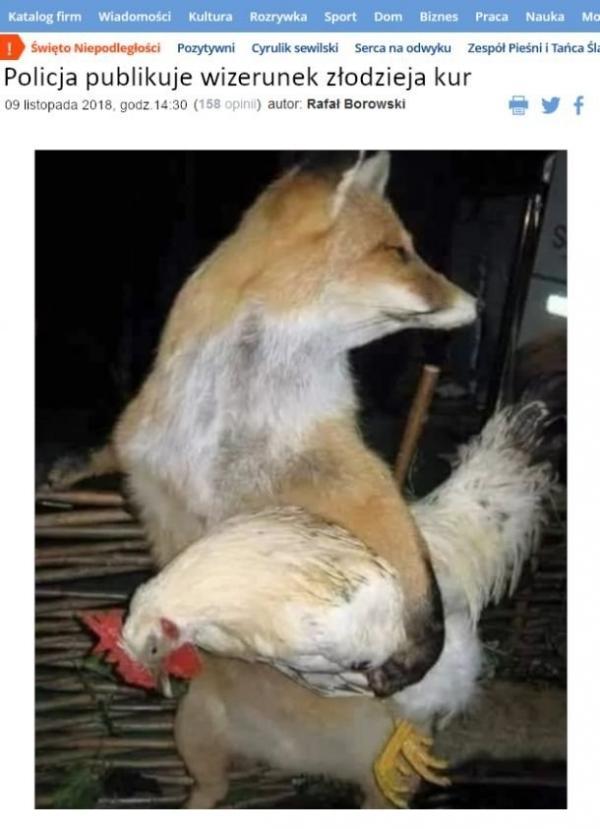 Policja publikuje wizerunek złodzieja kur