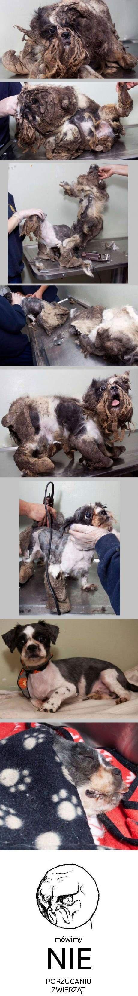 mówimy NIE porzucaniu zwierząt!