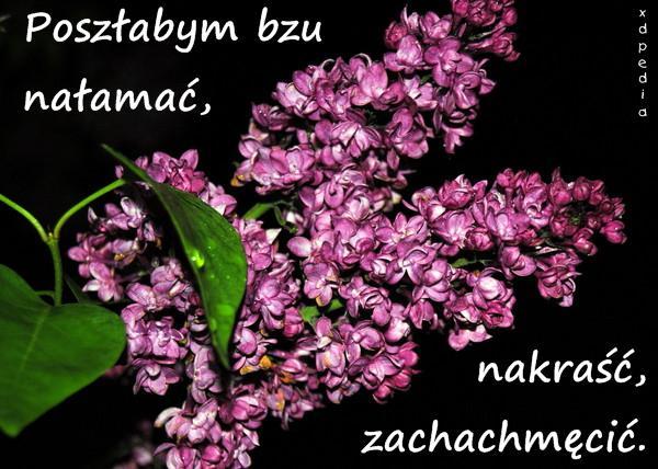 Kwiaty Kartki Z Okazji Dnia Matki Kartka Na Dzień Matki