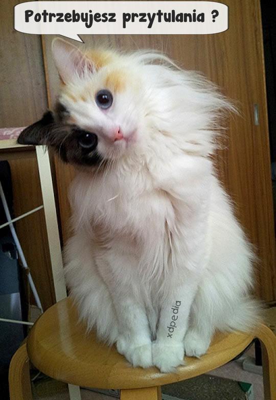Potrzebujesz przytulania? Tagi: kot, kociak, kotek, potrzeba, przytulanie, komiks, słodziak, besty, przytulićcię.