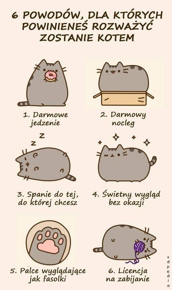 6 powodów, dla których powinieneś rozważyć zostanie kotem 1. Darmowe jedzenie 2. Darmowy nocleg 3. Spanie do tej, do której chcesz 4. Świetny wygląd bez okazji 5. Palce wyglądające jak fasolki 6. Licencja na zabijanie
