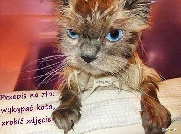 Przepis na zło: wykąpać kota, zrobić zdjęcie. Tagi: kot, memy, kotek, mem, kąpiel, słodziak, besty, zło.