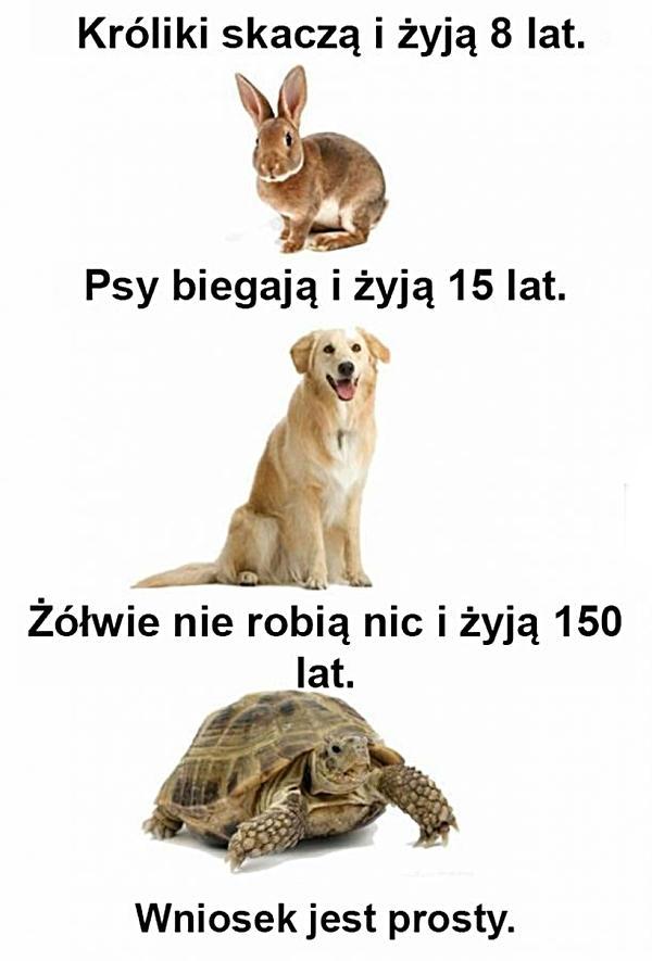 Króliki skaczą i żyją 8 lat. Psy biegają i żyją 15 lat. Żółwie nie robią nic i żyją 150 lat. Wniosek jest prosty.