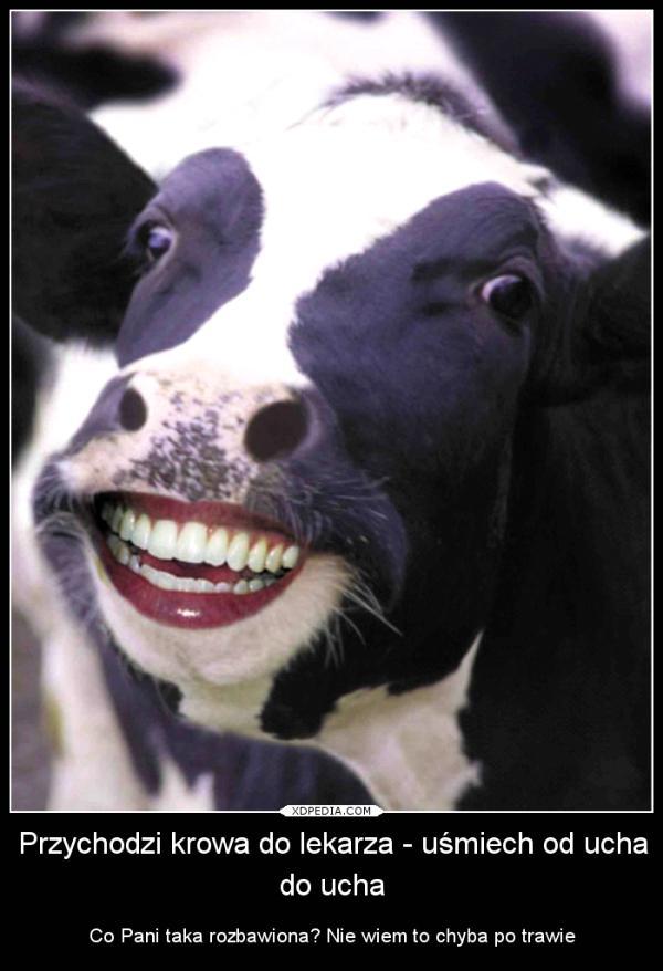 Przychodzi krowa do lekarza z uśmiechem od ucha do ucha Co Pani taka rozbawiona? Nie wiem to chyba po trawie