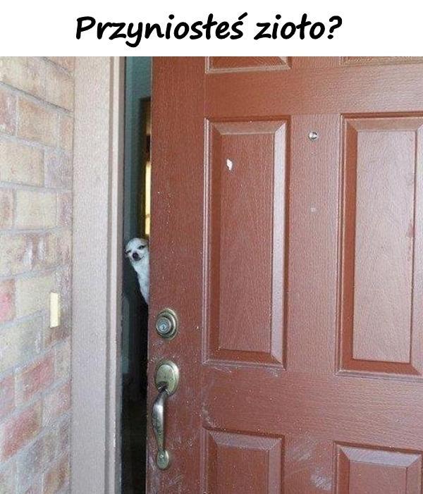 Przyniosłeś zioło?