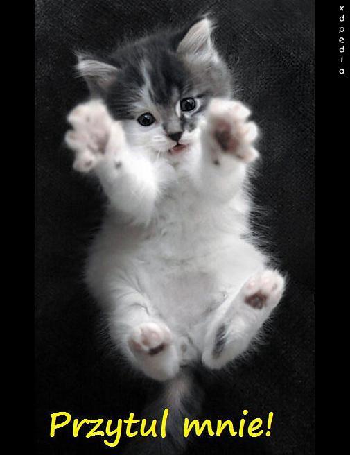 Przytul mnie!