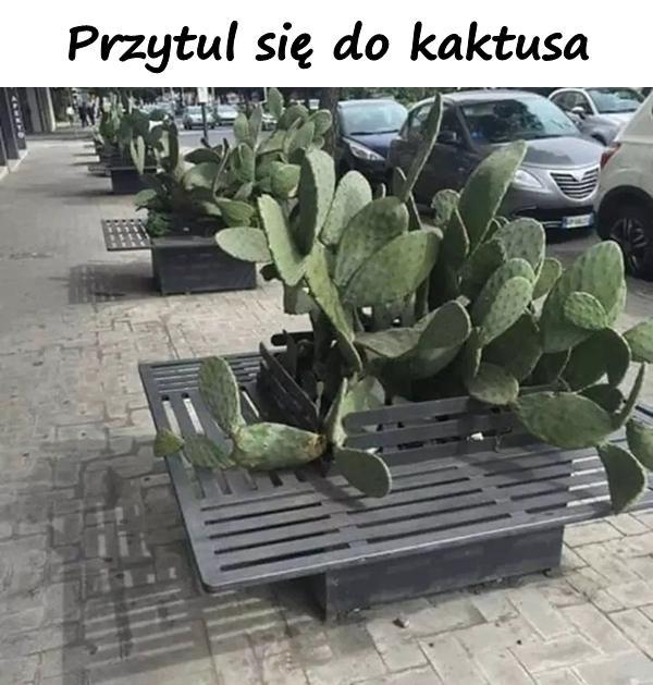 Przytul się do kaktusa