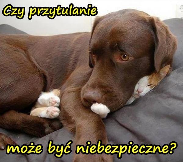 Mem Humor Kot śmieszne Obrazki Besty Niebezpieczeństwo Pies