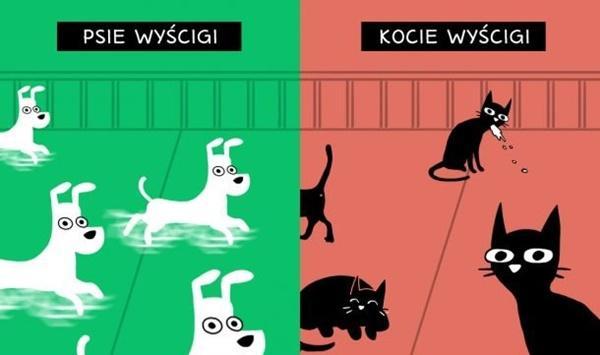 Psie wyścigi vs. Kocie wyścigi