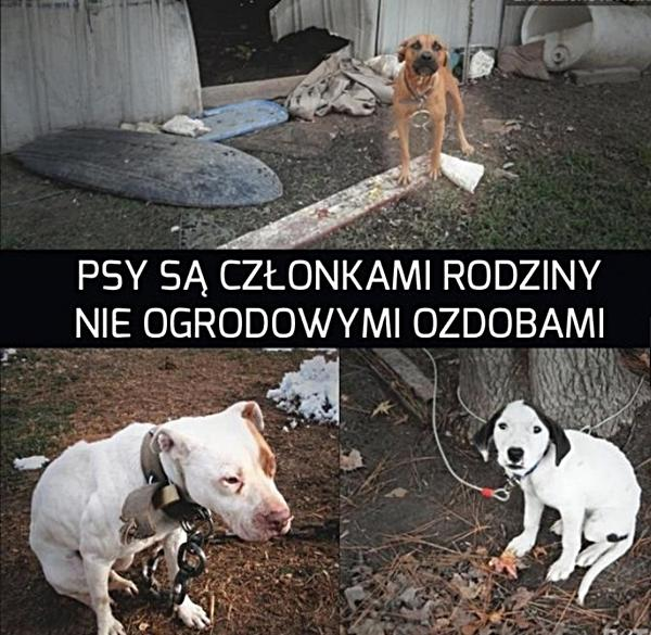 Psy są członkami rodziny, nie ogrodowymi ozdobami!