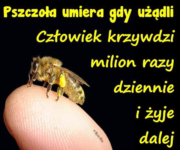 Pszczoła umiera gdy użądli. Człowiek krzywdzi milion razy dziennie i żyje dalej.