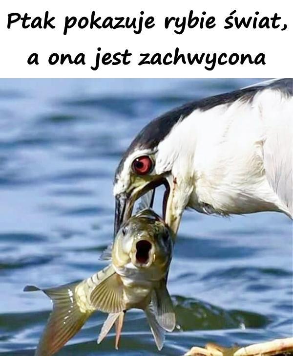 Ptak pokazuje rybie świat, a ona jest zachwycona