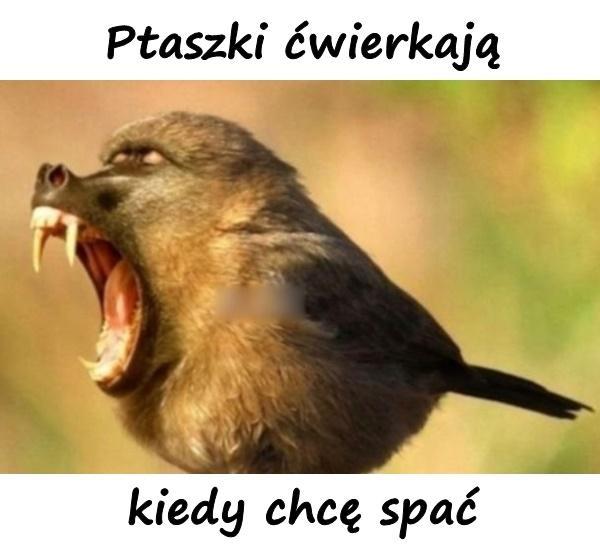 Ptaszki ćwierkają, kiedy chcę spać