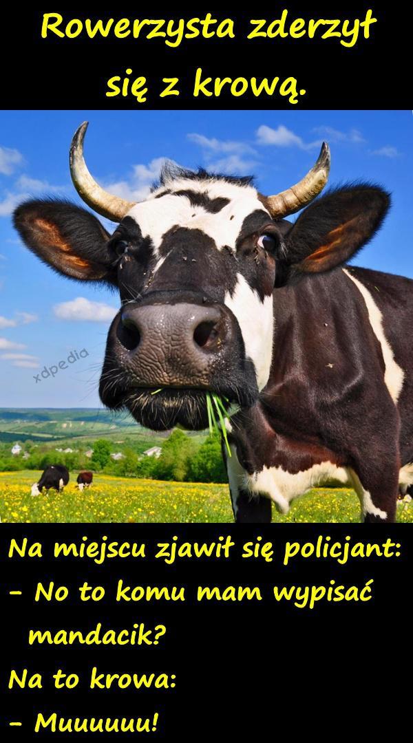Rowerzysta zderzył się z krową.  Na miejscu zjawił się policjant: - No to komu mam wypisać   mandacik? Na to krowa: - Muuuuuu! Tagi: demotywator, krowa, demotywatory, rowerzysta, policjant, kawał, demot, wypadek, mandat, dowcip.