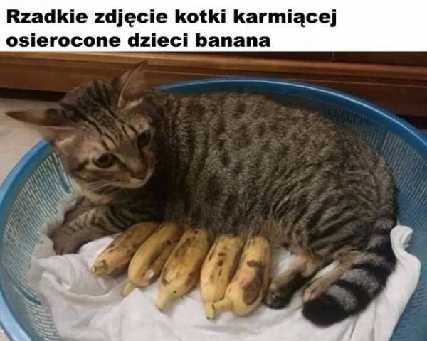 Rzadkie zdjęcie kotki karmiącej osierocone dzieci banana