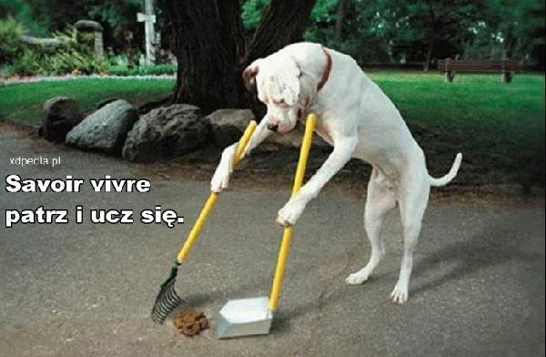 Savoir vivre - patrz i ucz się. Czasami musimy uczyć się od zwierząt.
