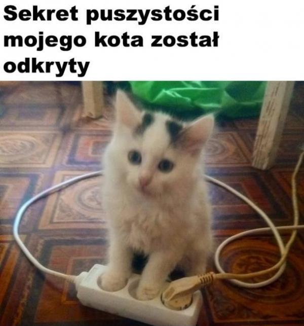 Sekret puszystości mojego kota ostał odkryty