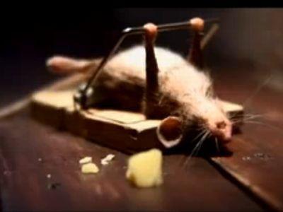 Mysz, która każdą chwilę wykorzystuje na trening