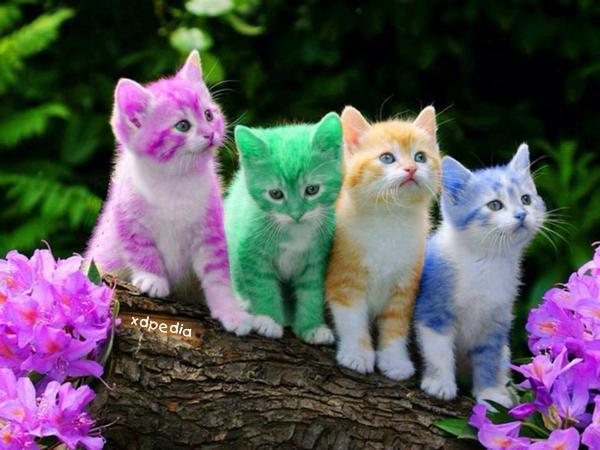 Słodziaki - kololowe kotki