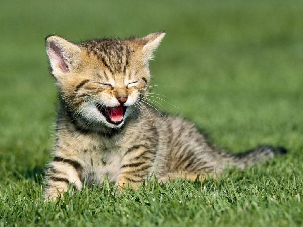 Czy zwierzęta potrafią się śmiać?