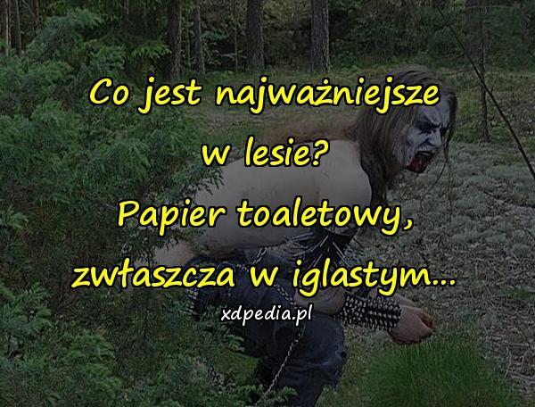 Co jest najważniejsze w lesie? Papier toaletowy, zwłaszcza w iglastym...