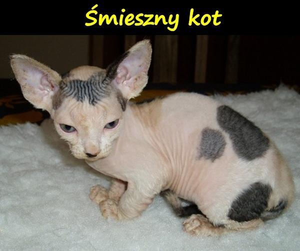 Śmieszny kot