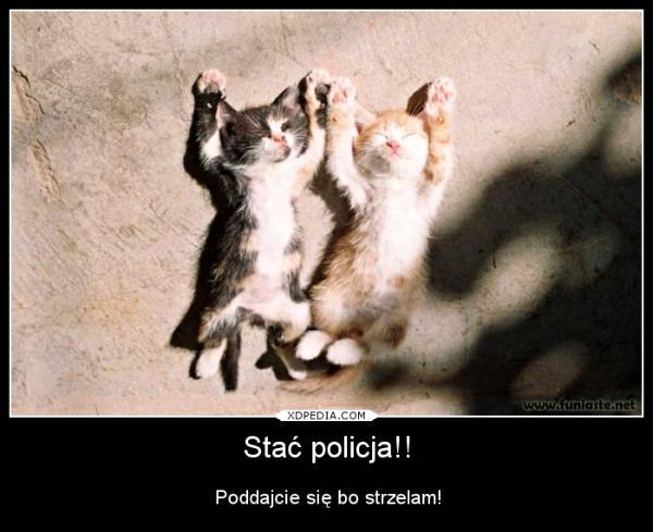 Stać policja!! Poddajcie się bo strzelam!
