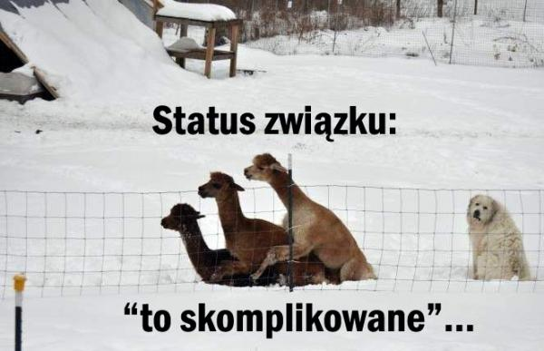 Status związku: to skomplikowane!