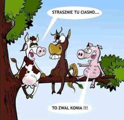 Strasznie tu ciasno... To zwal konia!!! Tagi: kwejk, koń, zwal.