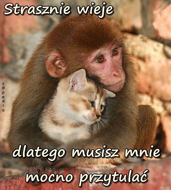 Strasznie wieje dlatego musisz mnie mocno przytulać Tagi: kot, kociak, memy, kotek, mem, przytulanie, przytul, psytul, słodziaki, przytulmnie, besty, lovsy, psytulanie, psytulmnie, temyśli, małpka.