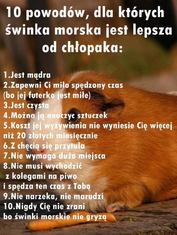 [Obrazek: swinka_morska_jest_lepsza_od_chlopaka_20...middle.jpg]